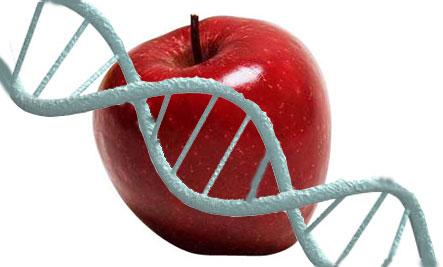CARACTERÍSTICAS DA DIETA DO DNA